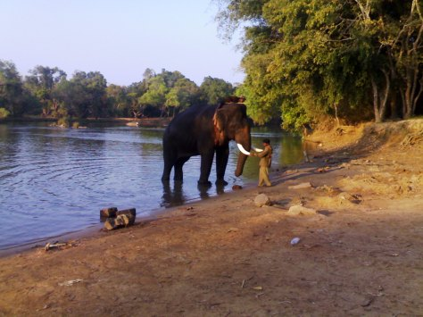 The mighty tusker - The entertainer for the day