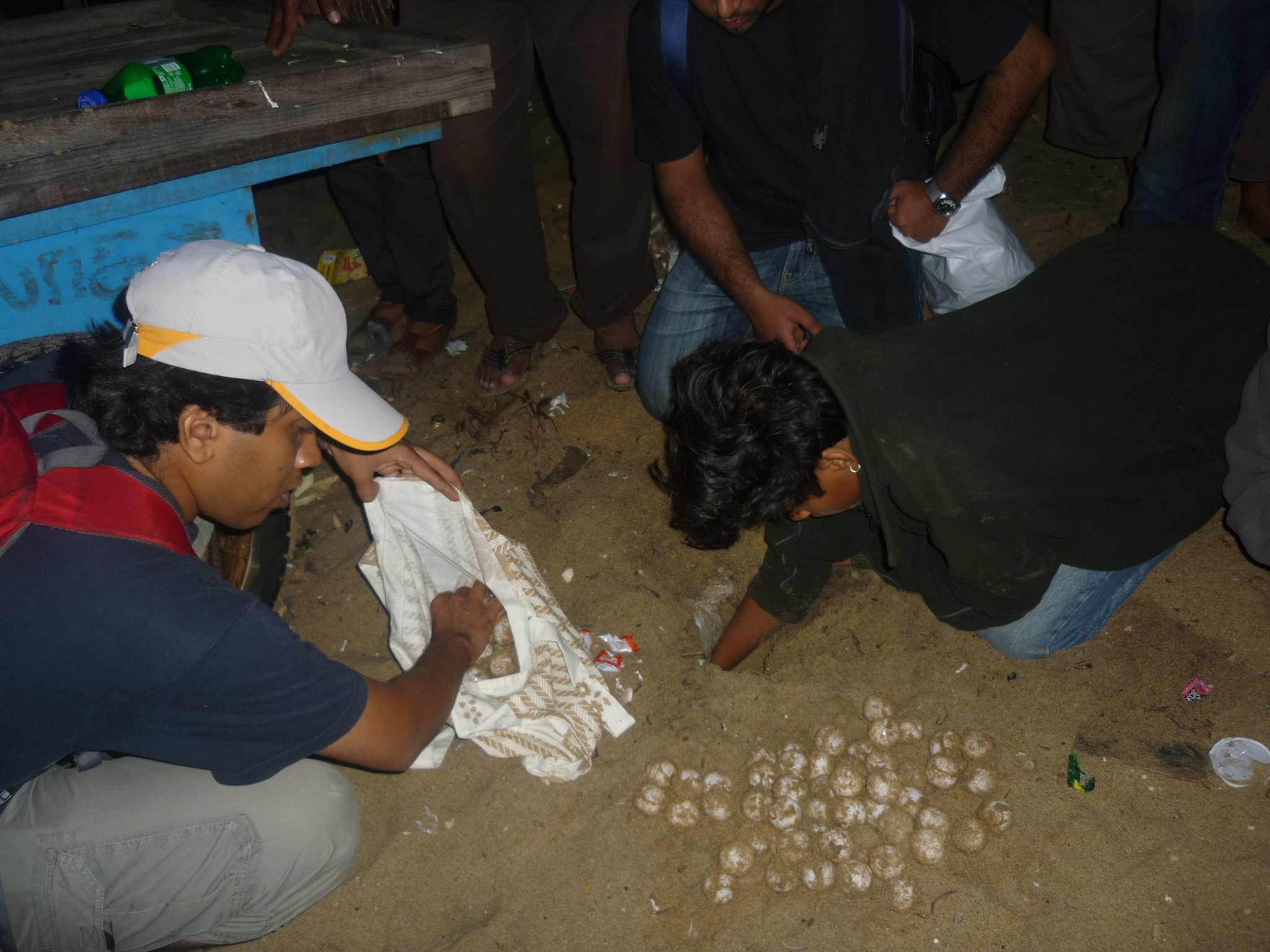 The volunteers unearthing the eggs