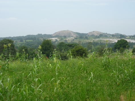 View of the Twin Devarabetta  hills from the farm lined road