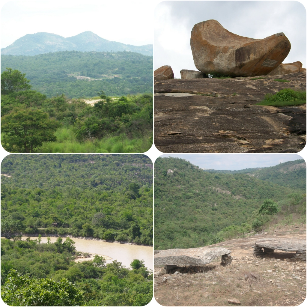 Views of the forest cover at Bannerghatta National park