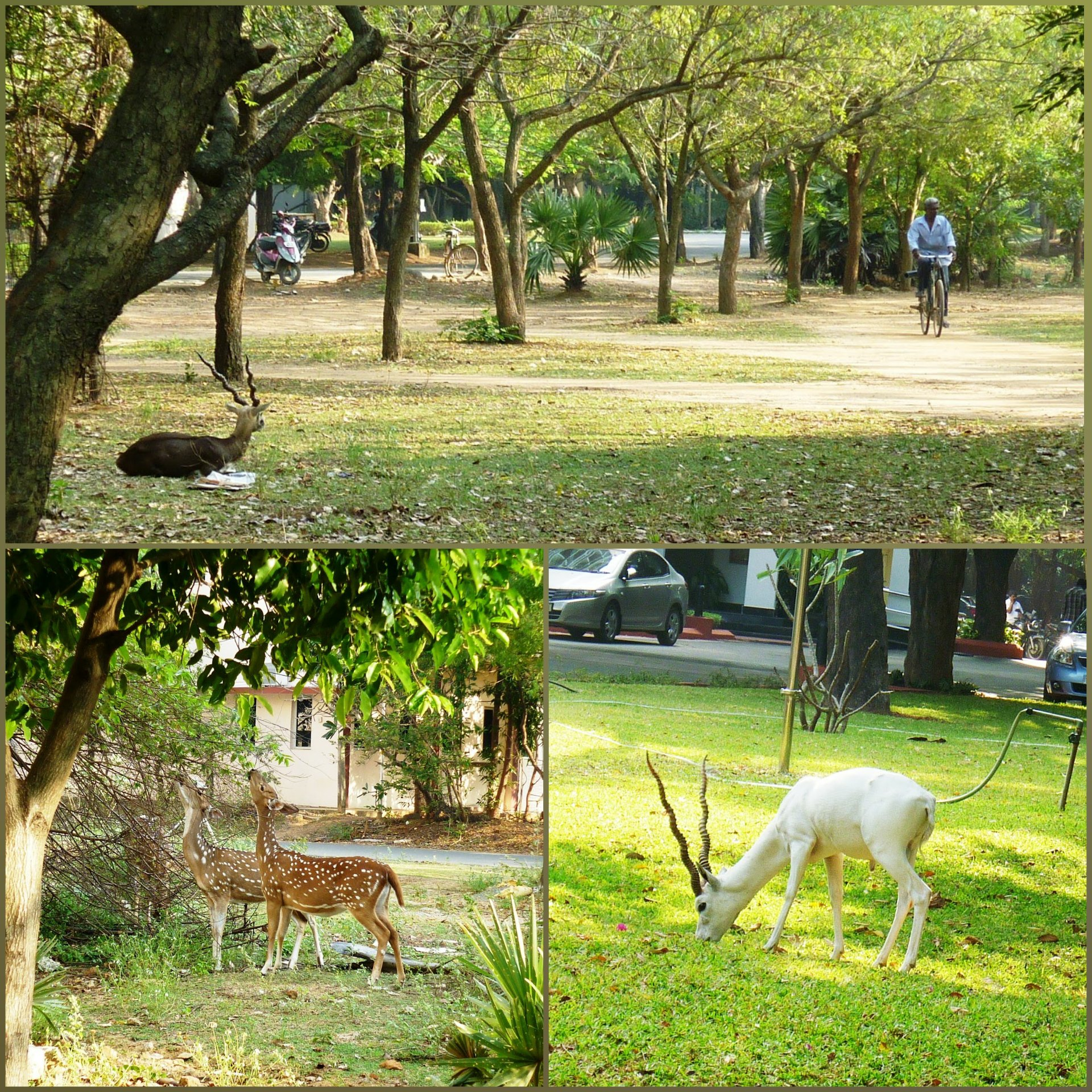 Wildlife at IIT Madras campus