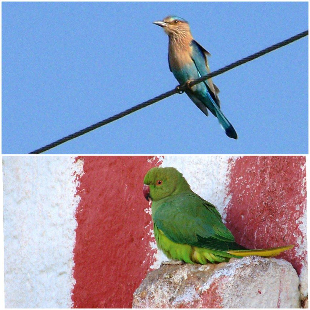 Birds spotted around Bangalore