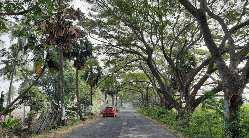 The Palm lined road leading to Athreyapuram